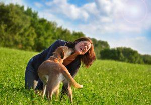 Tarifrechner Hundehaftpflichtversicherung