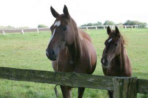 Tarifrechner Pferdehafpflichtversicherung